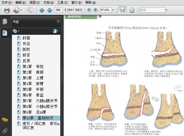 利用表格形式对奈特解剖图中的信息作进一步提炼,整理出有关骨,关节
