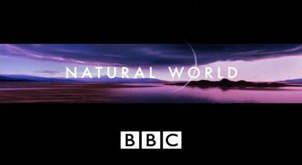 bbc-zhivaya-priroda