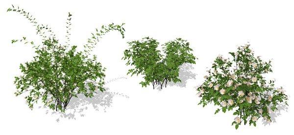 《xfrog植物素材灌木篇》(xfrog plants - shrubs version 2.0)