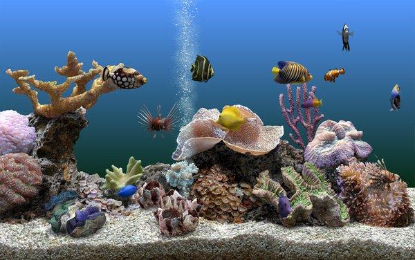 壁纸 海底 海底世界 海洋馆 水族馆 桌面 600_376